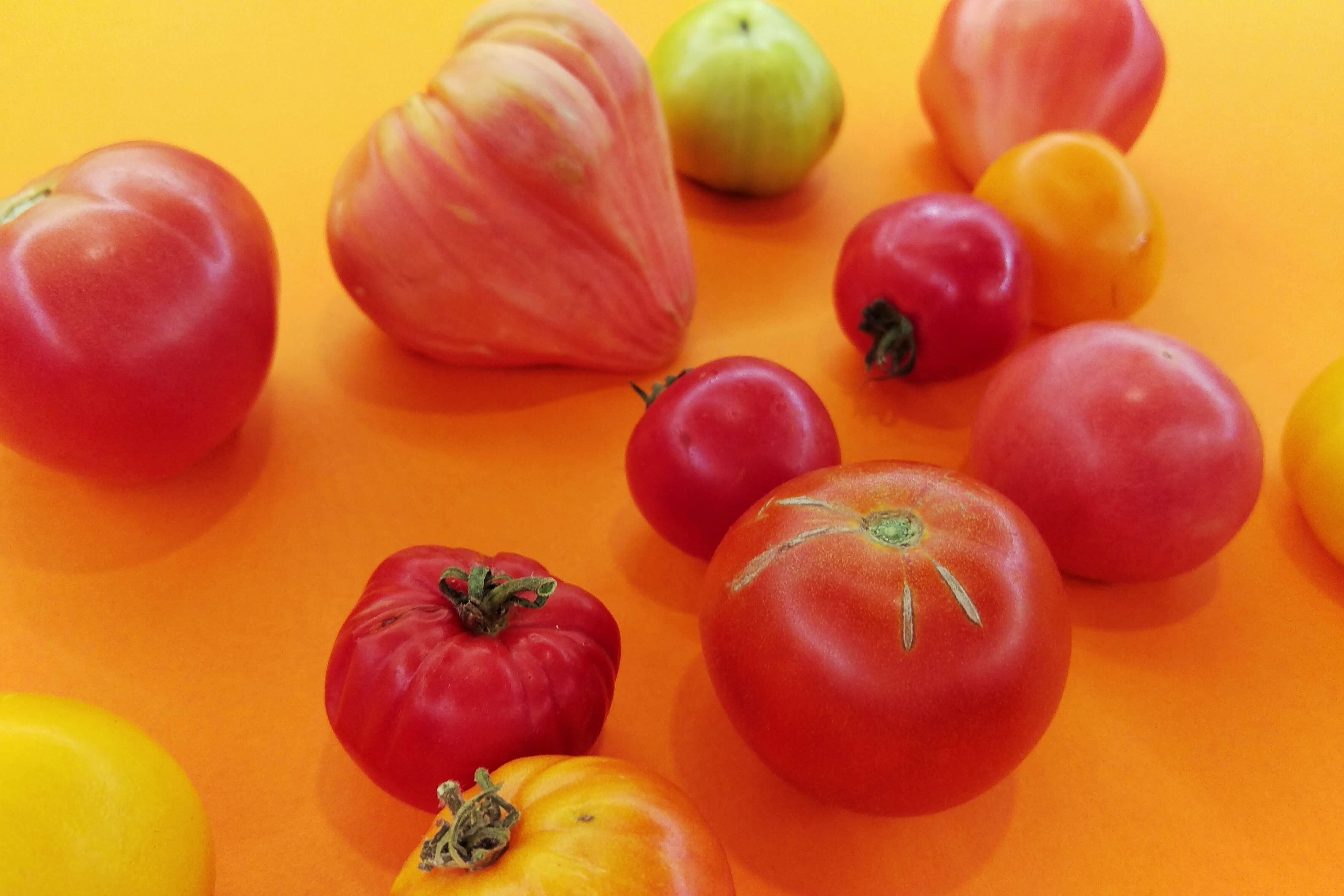 Najbrzydsze pomidory mają najwięcej smaku.